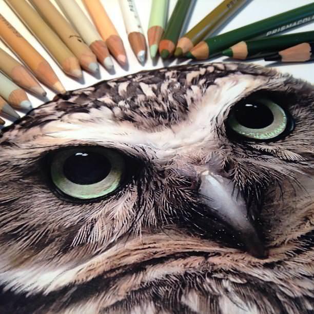リアル絵の描き方:フクロウ