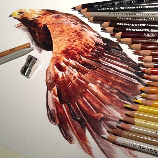 リアル絵の描き方:鷲