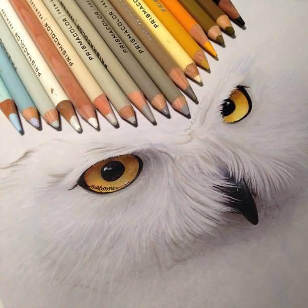 リアル絵の描き方:猛禽類の顔アップリアル絵