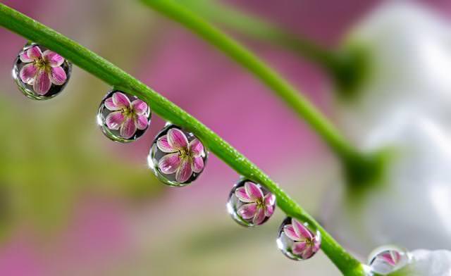 写真トリック:綺麗な花が閉じ込められている水滴がいっぱい