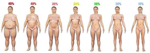 女性の体脂肪率一覧