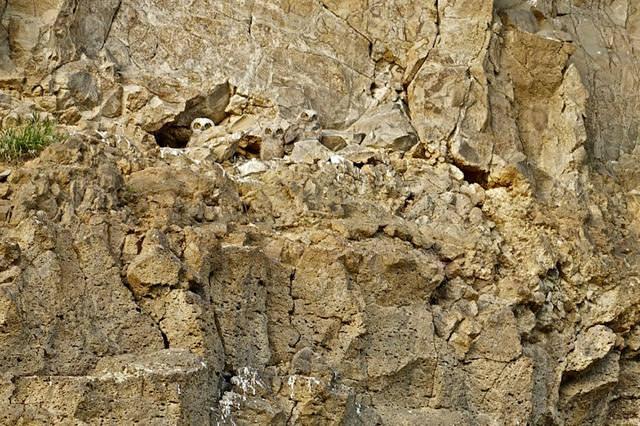 フクロウのカムフラージュ(擬態)