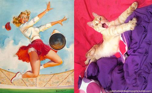 動物とそっくりな画像:飛び上がってバンザイだニャ〜