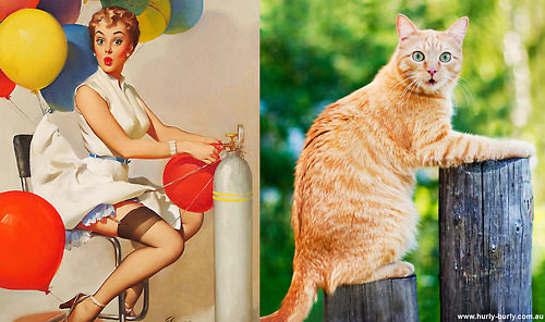 動物とそっくりな画像:驚いちゃったニャ〜