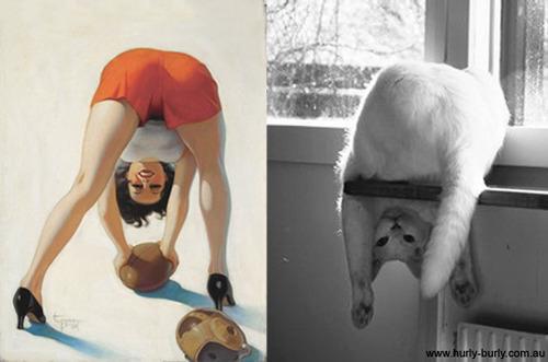 動物とそっくりな画像:脚の間からHELLOだニャ〜