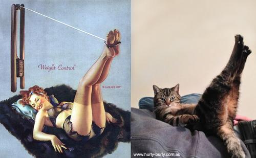 動物とそっくりな画像:ソファーの上で美脚を披露だニャ〜