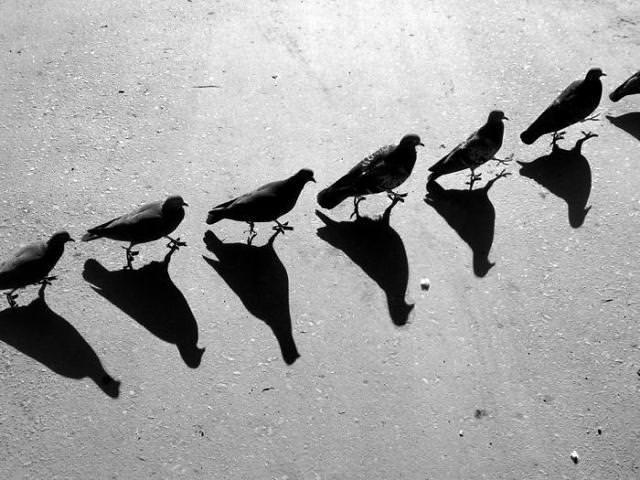 光と影の芸術:鳥の行進