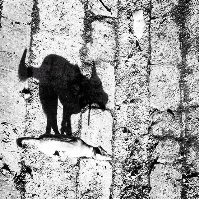 光と影の芸術:唸り声をあげる猛獣