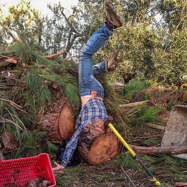 木を切り倒しながら転んだ面白画像