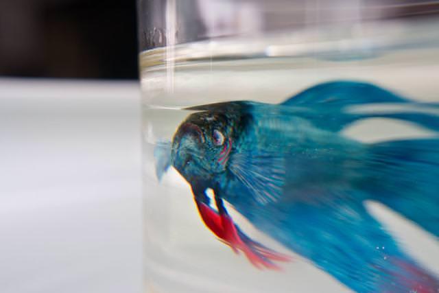本物そっくりな3Dアート:青い綺麗な魚