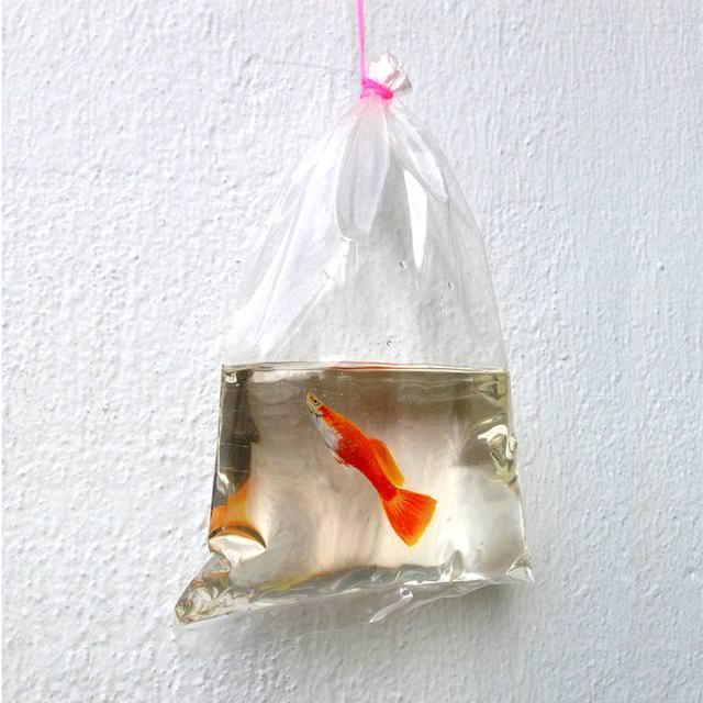 本物そっくりな3Dアート:ビニール袋の中に入っている金魚