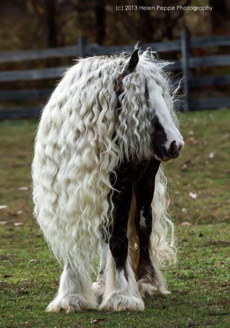 毛並みが美しい馬