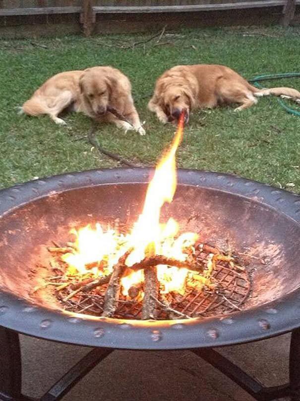 決定的瞬間:炎を食べるイヌ!