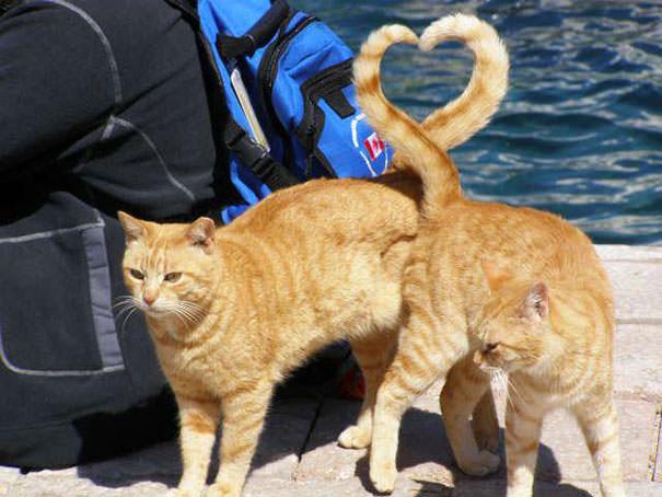 決定的瞬間:ラブラブの子猫ちゃんたち♪