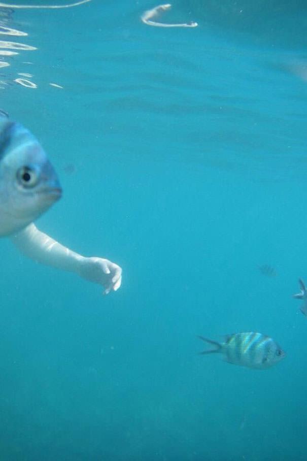 決定的瞬間:腕の生えた魚!