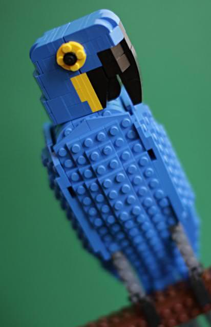 ギョロッとしたお目々が印象的なインコのLEGO作品