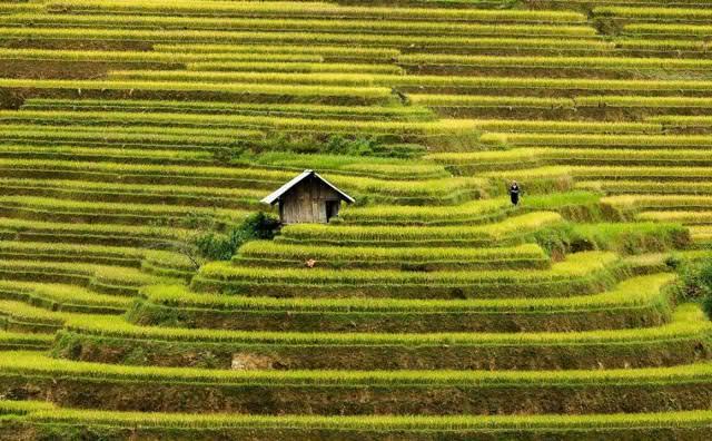 田んぼの中にポツンとたたずむ家(ベトナム-Mu Cang Chai)