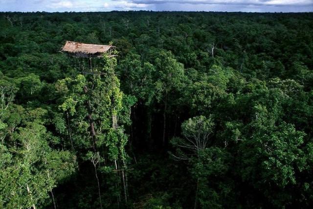 森の中で木の上にポツンとたたずむ家(パプア・ニューギニア)