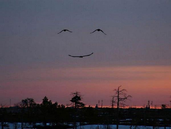 顔に見える鳥