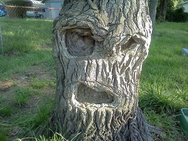 顔に見える木