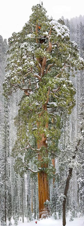 巨木に登る蛮勇な者