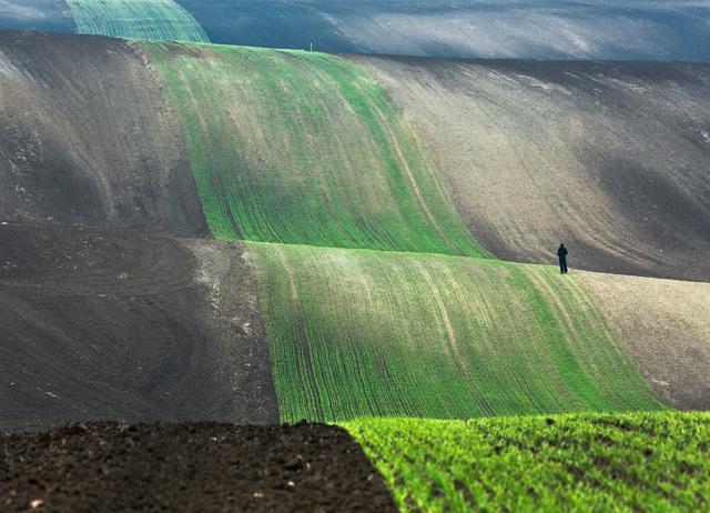 延々と何処までも続いている畑