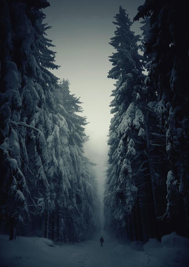 両脇に巨木がそびえ立つ雪道(チェコ)