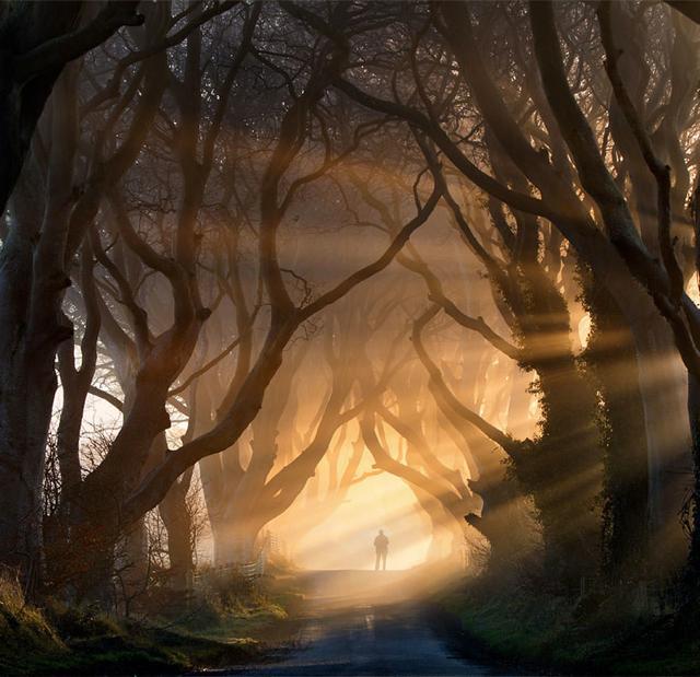 幻想的な森に佇む男性(アイルランド-ストラノーカム)