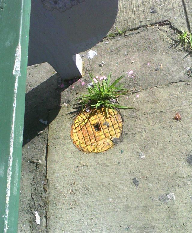 上手く地面に描かれたストリートアート:マンホールのパイナップル
