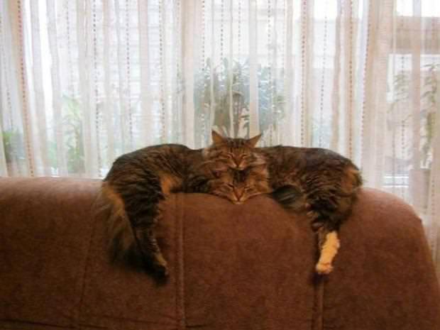 目の錯覚の面白写真:鏡に映ったかのような、左右対称のネコちゃん?!
