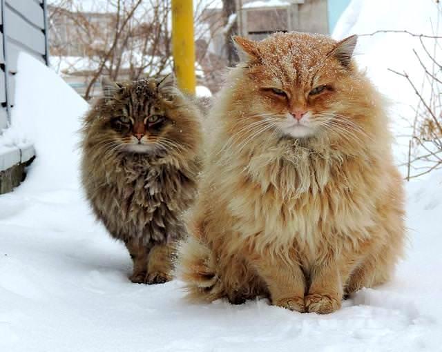 モフモフしたくなる猫や犬たち♪美しい毛並みを持つ動物画像20選