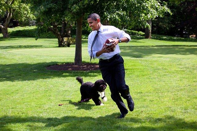 オバマの犬ボー:ファーストドッグ、