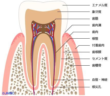 矯正歯科ネット