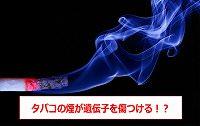 タバコ 遺伝子 影響・タバコ DNA 損傷