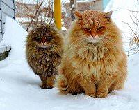 もふもふ 犬・もふもふ 猫